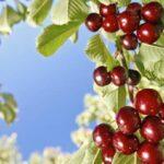 Avisos e informaciones fitosanitarias del mes de mayo